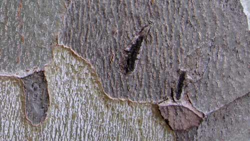 bark-003