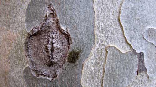 bark-005