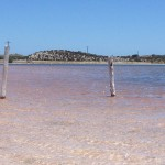 Pink salt lakes on Rottnest