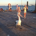 The pelican was a big hit with the kids